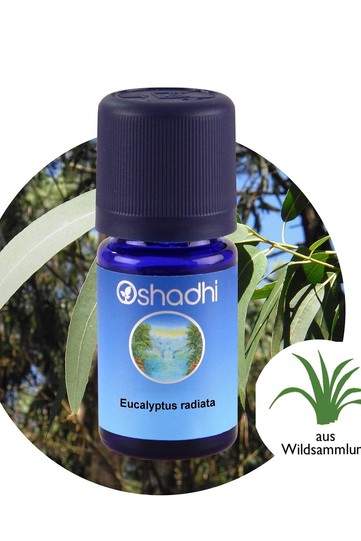 Eucalyptus20radiata-1.jpg