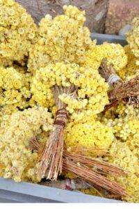 helichrysum italicum 1000x1500 (1)