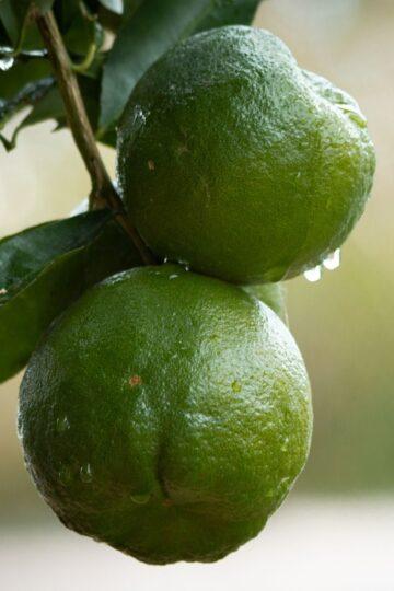 mandarin-oshadhi-klaarsus-1
